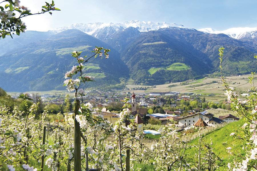 Frühlingswanderung mit Panoramablick auf Naturns