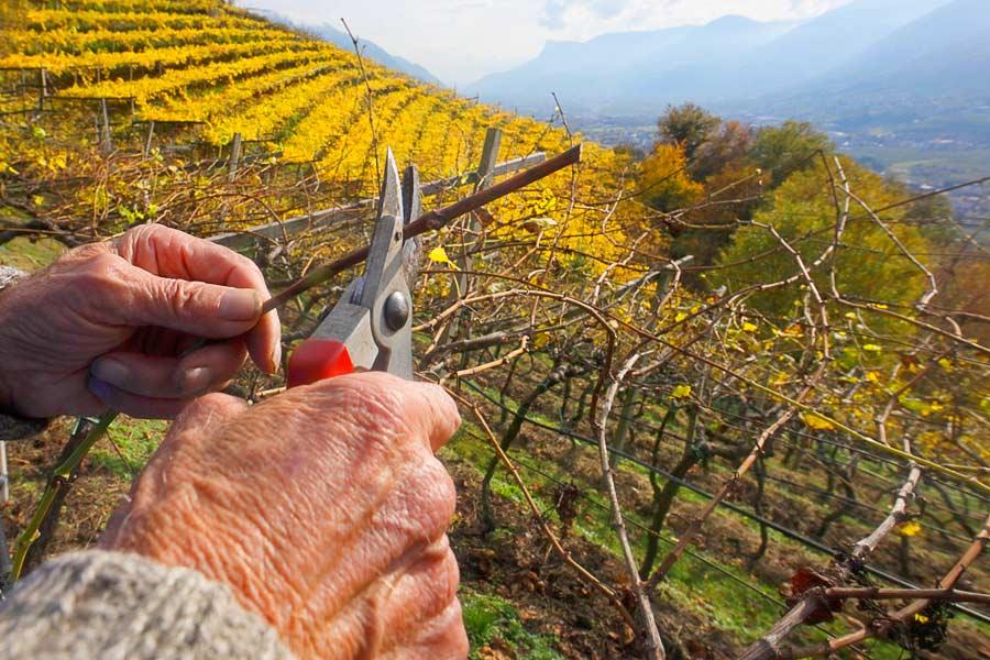 Südtirol hat eine Weinerfahrung von über 2000 Jahren